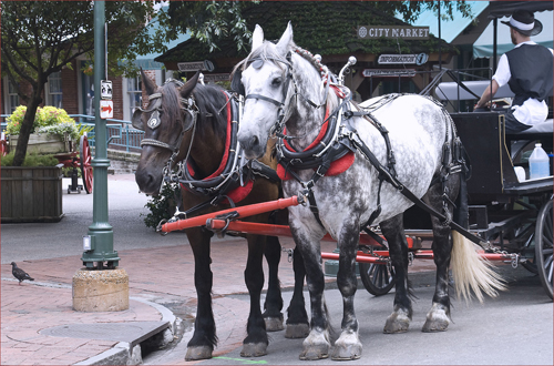 City Market Carriage Ride Tours -- Savannah (GA) July 2012 by Ron Cogswell , on Flickr