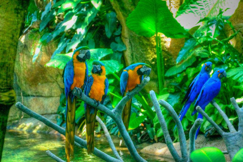 Sightseeing Texas Places To Visit Texas Moody Gardens