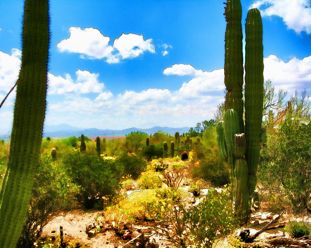 saguaro cacti, tucson, arizona digital cartoon-charlesw.baileyjr